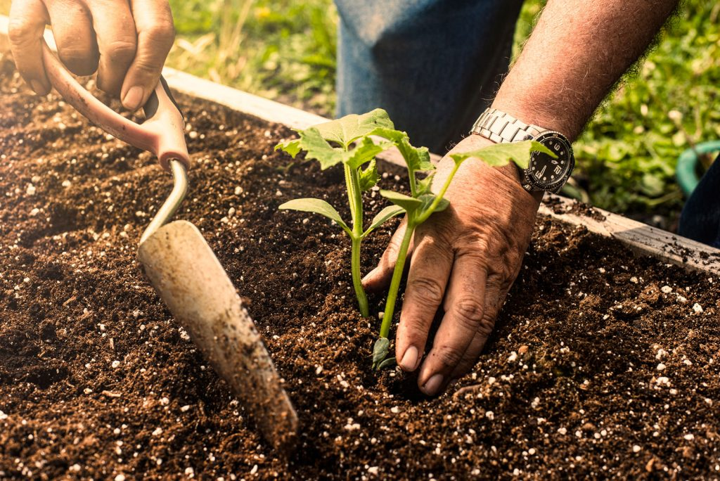 How to find best soil for the garden?